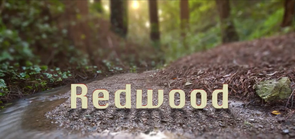 Sublime Motion Control Video of Redwoods Revisited