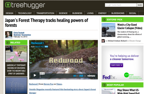 tree-hugger-redwood-video